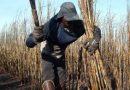 Para Bolsonaro mais vale o gado do agronegócio do que os direitos e a vida dos trabalhadores